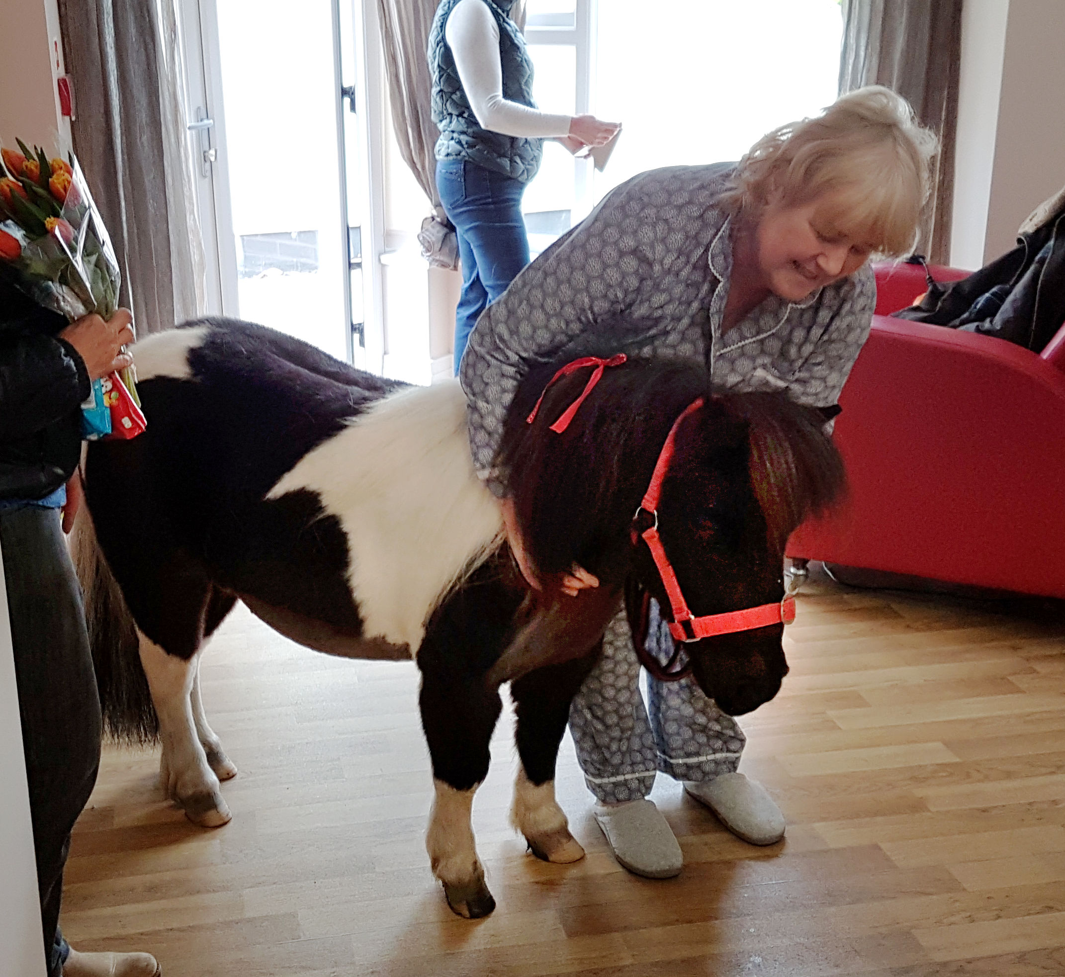 pony in hospice